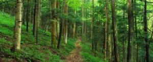 Giảm stress hiệu quả bằng cách…ngắm cây xanh
